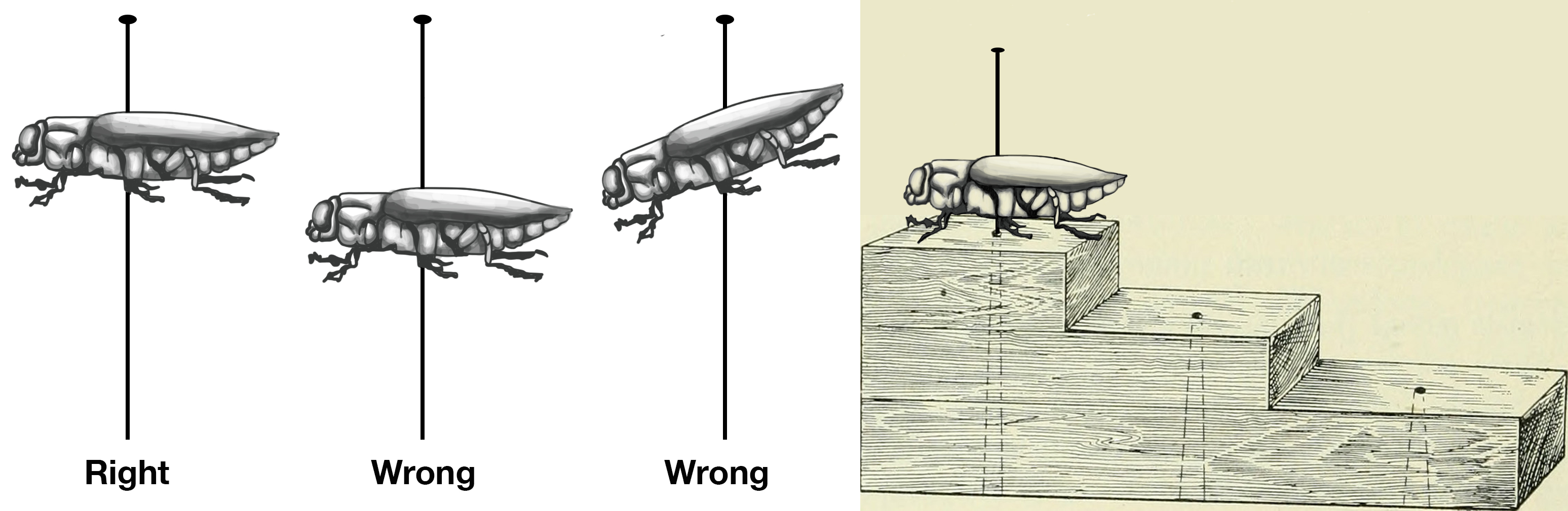 Figure 1-11 (Left): Keep insect level on the pin. Figure 1-12 (Right): Pinning block use