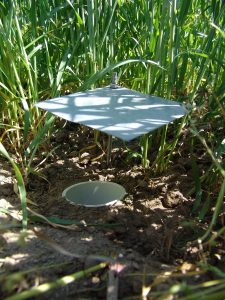 Figure 1-5: Pitfall traps are ideal for collection nocturnal and ground crawling species.