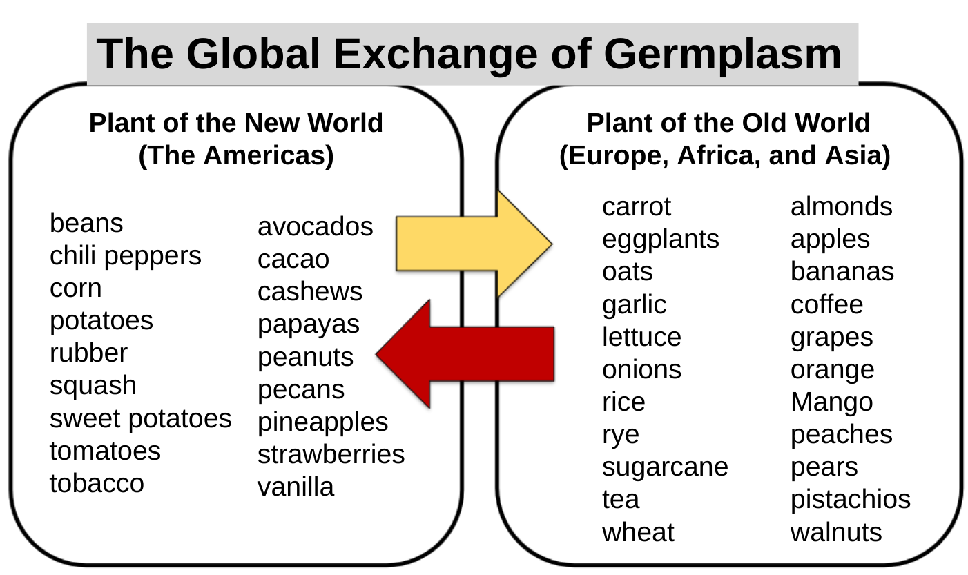 Examples of food crops exchanged between the New World and the Old World after 15th century.