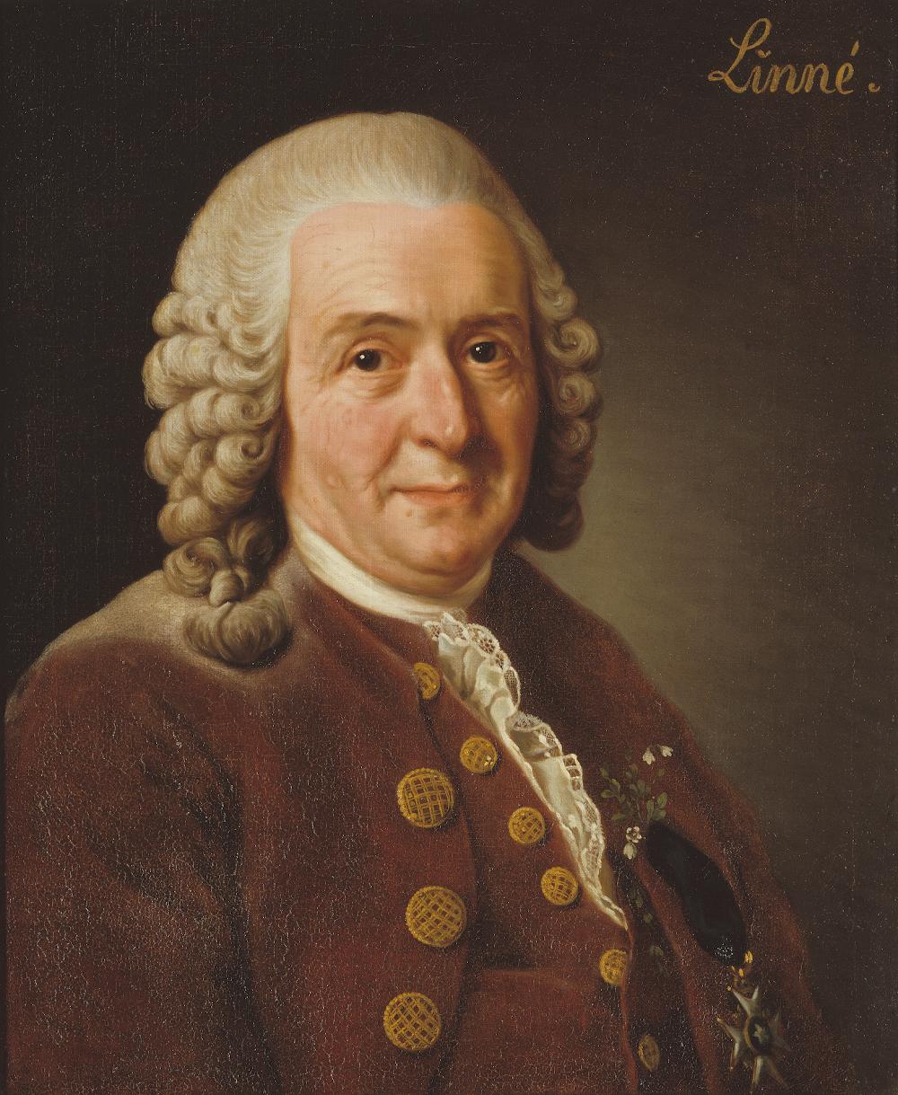 Portrait of Linnaeus (1707-1778).