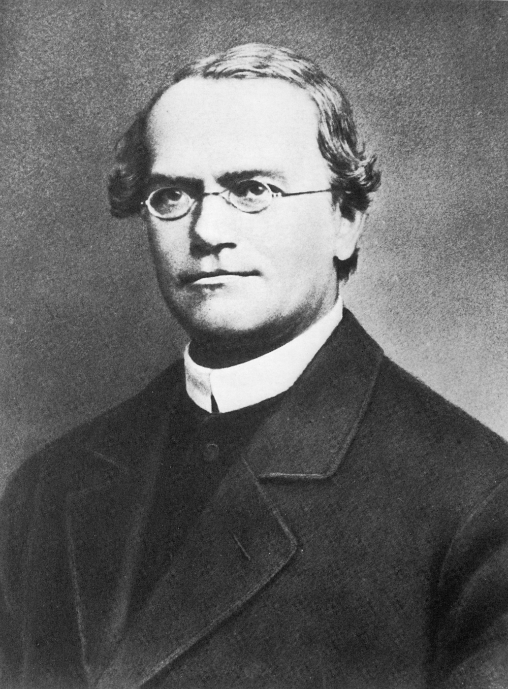 Gregor Johann Mendel (1822-1884) was the first person to analyze patterns of inheritance.