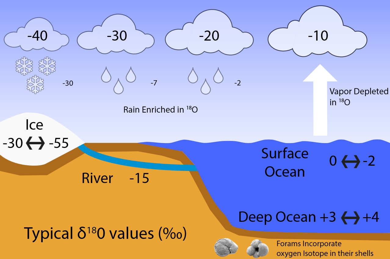 Figure B2: Typical δ<sup>18</sup>O values (in permil). Surface ocean water has δ<sup>18</sup>O values of around zero. Due to fractionation during evaporation less heavy isotopes make it into the air, which leads to negative delta values of around -10 ‰. Condensation prefers the heavy isotopes for reasons analogous to evaporation. In this example the first precipitation thus has a δ<sup>18</sup>O value of about -2 ‰, the remaining water vapor will be further depleted in <sup>18</sup>O relative to <sup>16</sup>O thus that its δ<sup>18</sup>O value is approximately -20 ‰. Any subsequent precipitation event further depletes <sup>18</sup>O. This process is known as Rayleigh distillation and leads to very low δ<sup>18</sup>O values of less than -30 ‰ for snow falling onto ice sheets. Thus, ice has very negative δ<sup>18</sup>O of between -30 and -55 ‰. Deep ocean values today are about +3 to +4 ‰. During the LGM, as more water was locked up in ice sheets, the remaining ocean water became heavier in δ<sup>18</sup>O by about 2 ‰. We know this because foraminifera build their calcium carbonate (CaCO<sub>3</sub>) shells using the surrounding sea water. Thus they incorporate the oxygen isotopic composition of the water into their shells which are preserved in the sediments and can be measured in the lab.