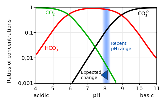 Ratios of carbonate species concentrations as a function of the pH. Currently average seawater has a pH of about 8.1. Therefore most carbon in the ocean is in the form of bicarbonate. Addition of anthropogenic CO2 decreases the pH. From wikipedia.org.