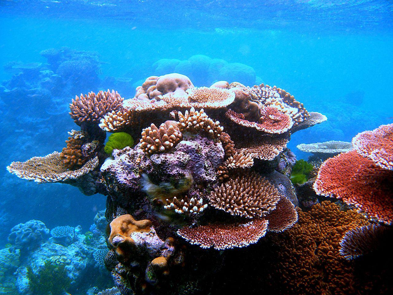 Corals (animals).