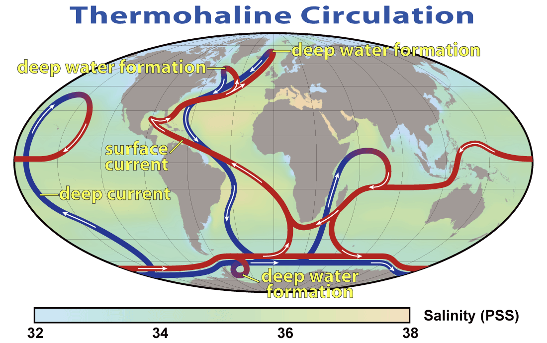 Cartoon of the Deep Ocean Circulation. Red and blue ribbons represent surface and deep currents, respectively. From wikipedia.org.