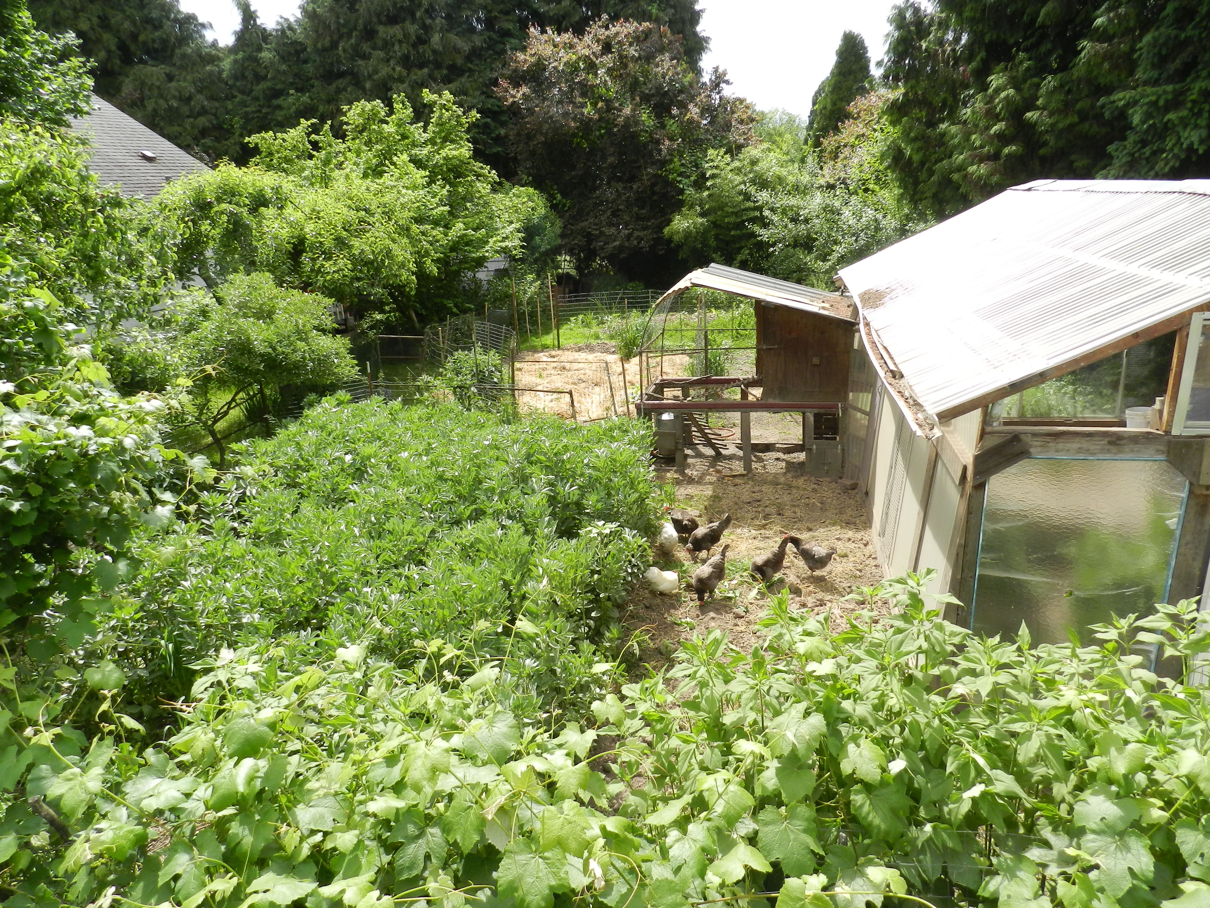 Cover image for Introduction to Permaculture