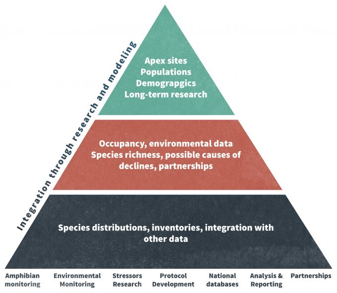 Figure 12.1. The USGS Amphibian Research and Monitoring Initiative (ARMI) conceptual pyramid. Extensive analyses are conducted at the national level (the base of the pyramid), while intensive research occurs at a smaller number of sites (the apex of the pyramid). The middle of the pyramid is where most of the analysis and reporting occurs (redrafted from Muths et al. 2006).