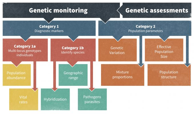 Figure 13.2. Examples of genetic monitoring and the types of information that can be garnered from these techniques. Figure redrafted from Schwartz et al. (2007).