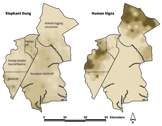 Figure 2.8. Interpolated elephant dung count and human-sign frequency across the Ndoki-Dazanga MIKE Site. Increasing darkness of sites signifies increasing dung and human-sign frequency. With permission from S. Blake.