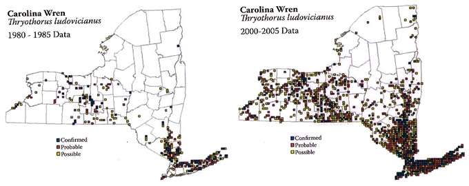 Figure 2.9. Changes in the distribution of the Carolina Wren between two state-wide atlases conducted in 1980-1985 and 2000-2005. This species has shown one of the most dramatic increases in occupancy of any species recorded during the atlas project.