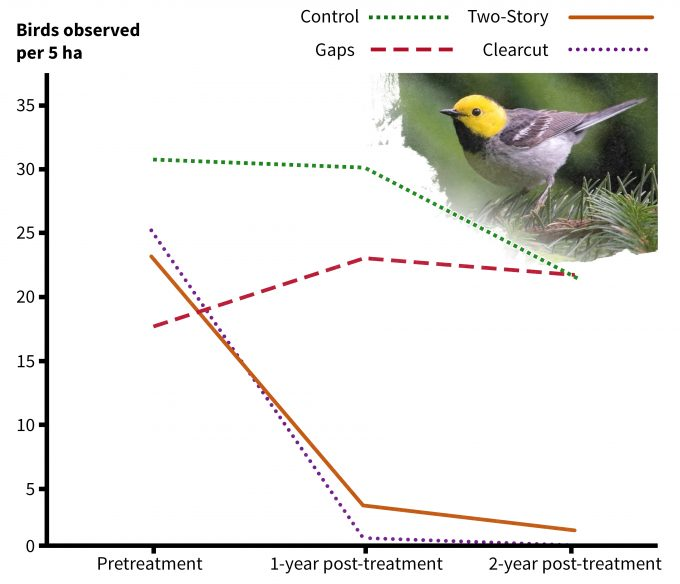 Figure 5.15. Change in hermit warbler detections following silvicultural treatments illustrating cause and effect monitoring results (redrafted from Chambers et al. 1999). Photo by Frode Jacobsen and published under creative commons.