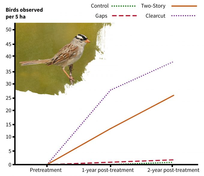 Figure 5.5. Change in white-crowned sparrow detections following silvicultural treatments illustrating cause and effect monitoring results (redrafted from Chambers et al. 1999). Photo by Wolfgang Wander and published under creative commons.