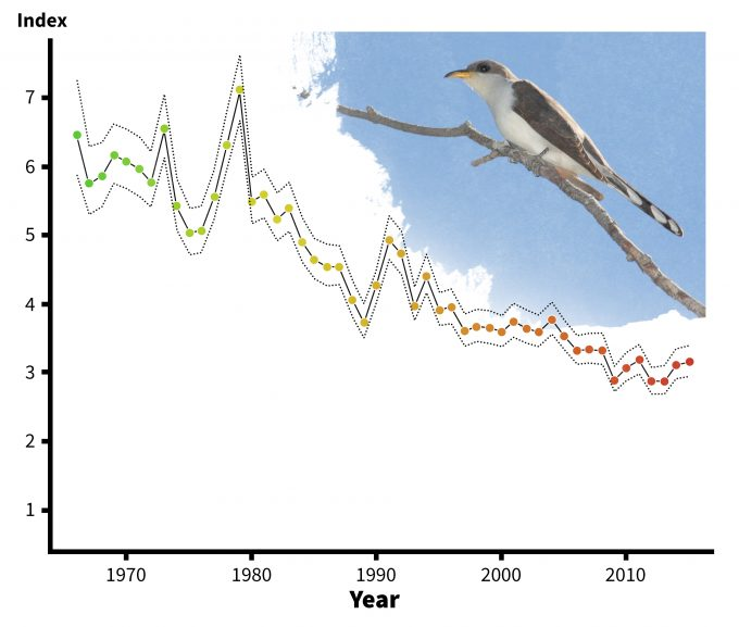 Figure 5.6. Trends in abundance of yellow-billed cuckoos over its geographic range, 1966-1996 (redrafted from Sauer et al. 2001). Note that data summaries are also available for smaller areas such as ecoregions and states. These data may address a portion of a conceptual model and be valuable in designing a monitoring plan. Photo by Dominic Sherony and published under creative commons.