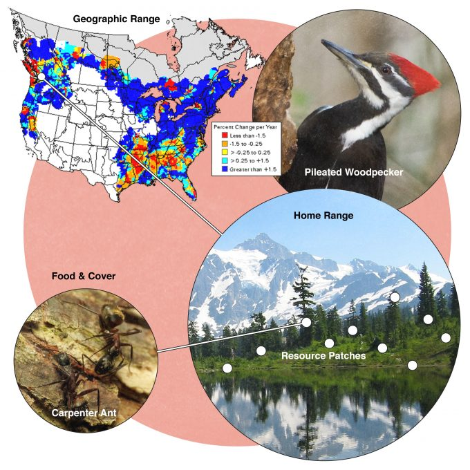 Figure 9.1. Hierarchical habitat selection as described by Johnson (1980). This generalized concept is illustrated using pileated woodpeckers as an example. Range map from USGS Biological Resources Division, used with permission. Pileated woodpecker photo from Washington Department of Fisheries and Wildlife, used with permission. Photos provided by Shenandoah National Park (Pileated Woodpecker), Katja Schulz (Carpenter Ants), and Pixabay.com (Mount Shuksan) and published under creative commons.