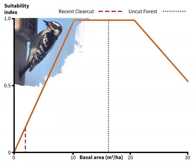 Figure 9.6. Habitat suitability relationship for downy woodpeckers for one of two suitability indices: basal area. Redrafted from Schroeder (1982). Photo by Mike's Birds and published under creative commons.