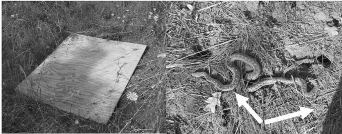 Figure 8.6. Live traps attached to trees are particularly effective at sampling flying squirrels and other arboreal species. Photo of flying squirrel by Cheron Ferland, used with permission. Photo of woman checking trap by Laura Navarrette and used with permission.