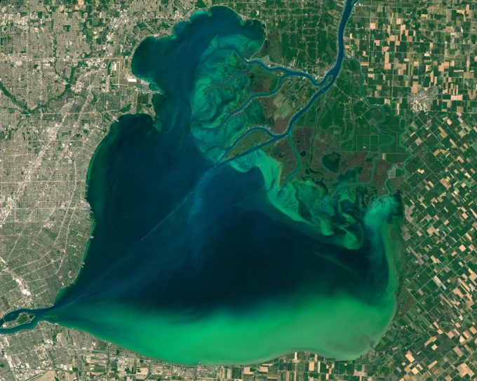 Figure 2.1. Algae accumulation is a common problem associated with environmental contaminants and agricultural run-off. The image above shows the algal blooms of Lake St. Clair and in western Lake Erie. Image Credit: NASA Earth Observatory images by Joshua Stevens, using Landsat data from the U.S. Geological Survey