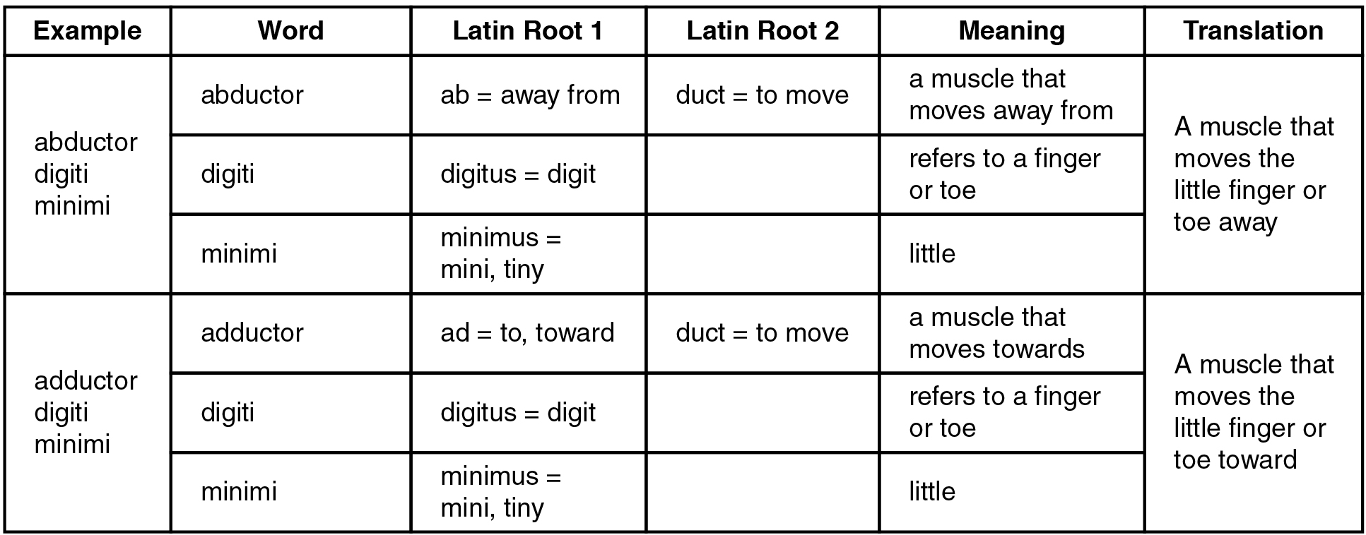 This table shows two examples of muscle names and how to translate them based on their Latin roots. The first row uses abductor digiti minimi as an example. The word abductor comes from the Latin roots ab, which means away from, and duct, which means to move. Therefore an abductor is a muscle that moves away from something. The word digiti comes from the Latin root digititus, which means digit and refers to a finger or toe. The word minimi comes from the Latin root minimus, which means minimum, tiny, or little. Therefore, the abductor digiti minimi is a muscle that moves the little finger or toe away. The second row uses the adductor digiti minimi as an example. The word adductor comes from the Latin root ad, which means to or toward, and duct, which means to move. Therefore an adductor is a muscle that moves toward something. As with the abductor digiti minimi, digiti refers to a finger or toe and minimi refers to something that is little. Therefore the adductor digiti minimi is a muscle that moves the little finger or toe forward.