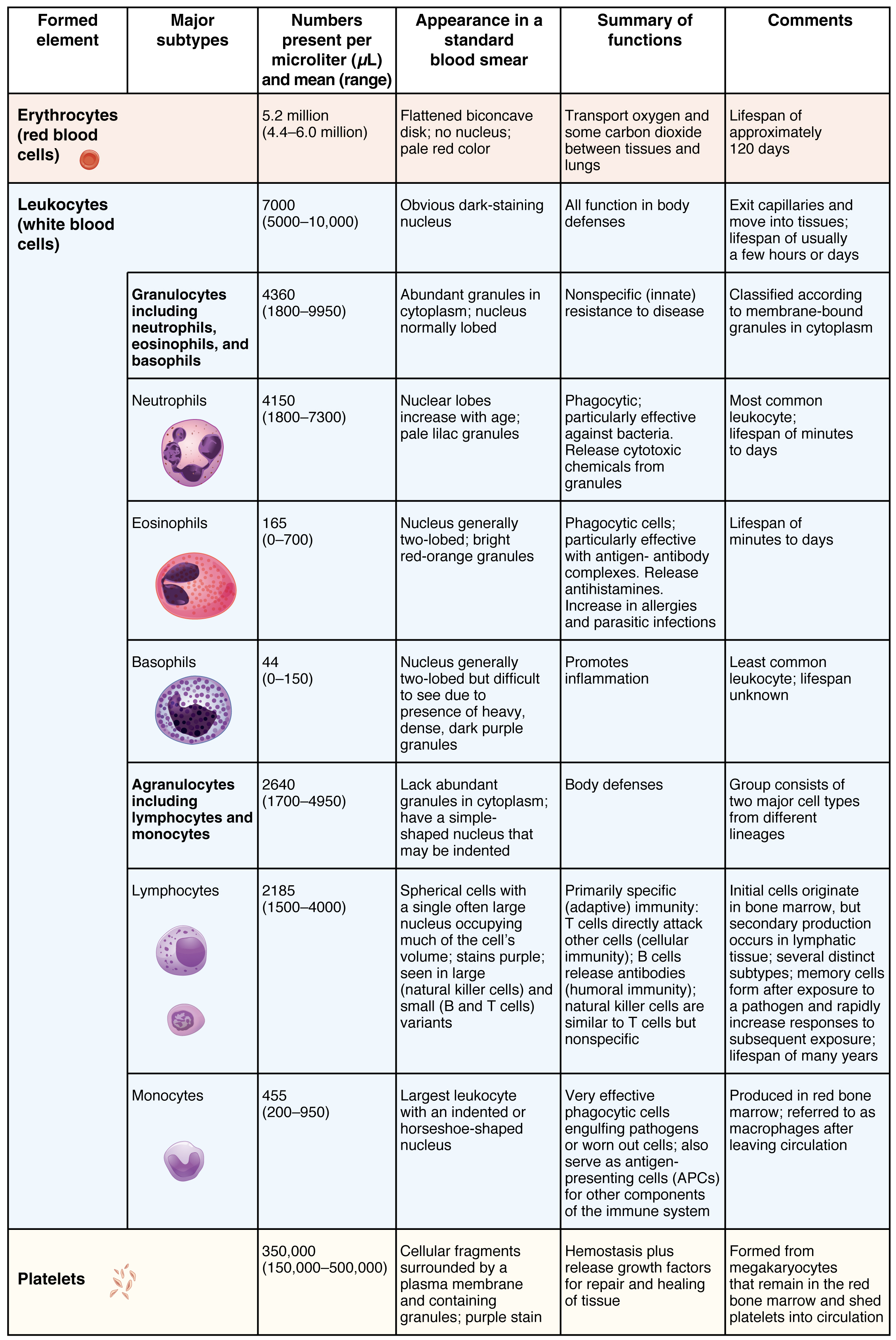 This table shows the different types of cells present in blood, the number of cells, their appearance, and a summary of their function.