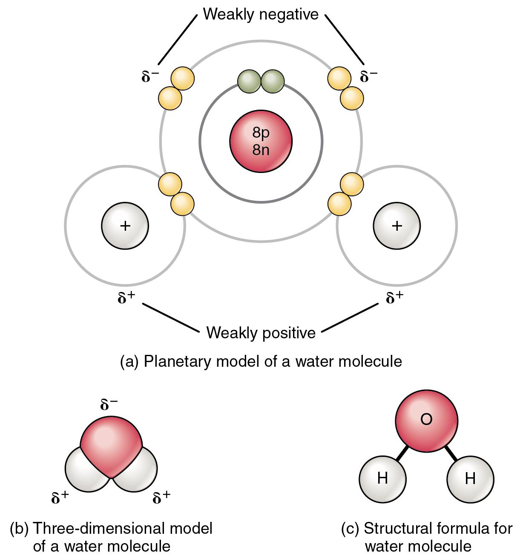 2 2 Chemical Bonds Anatomy Physiology