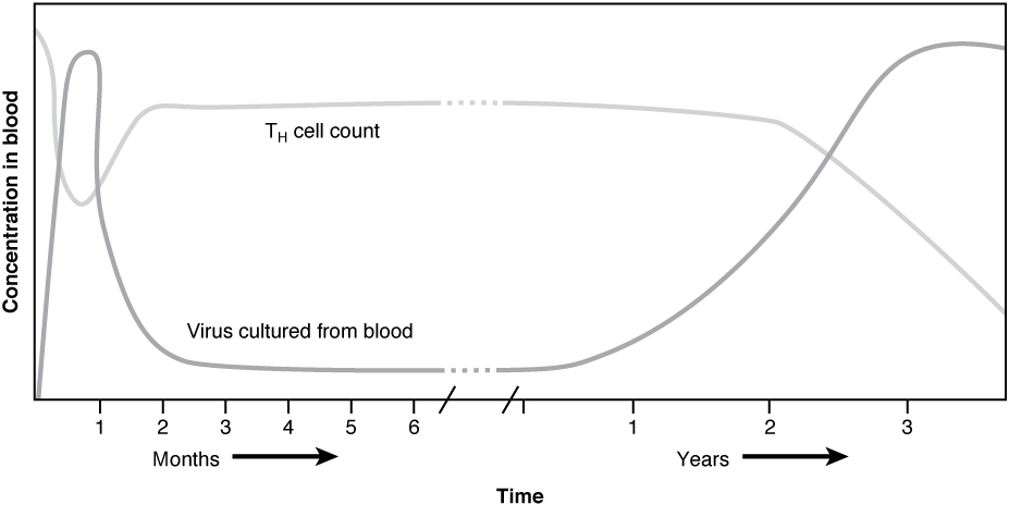 This graph shows the concentration of HIV viral particles in blood over time in years.