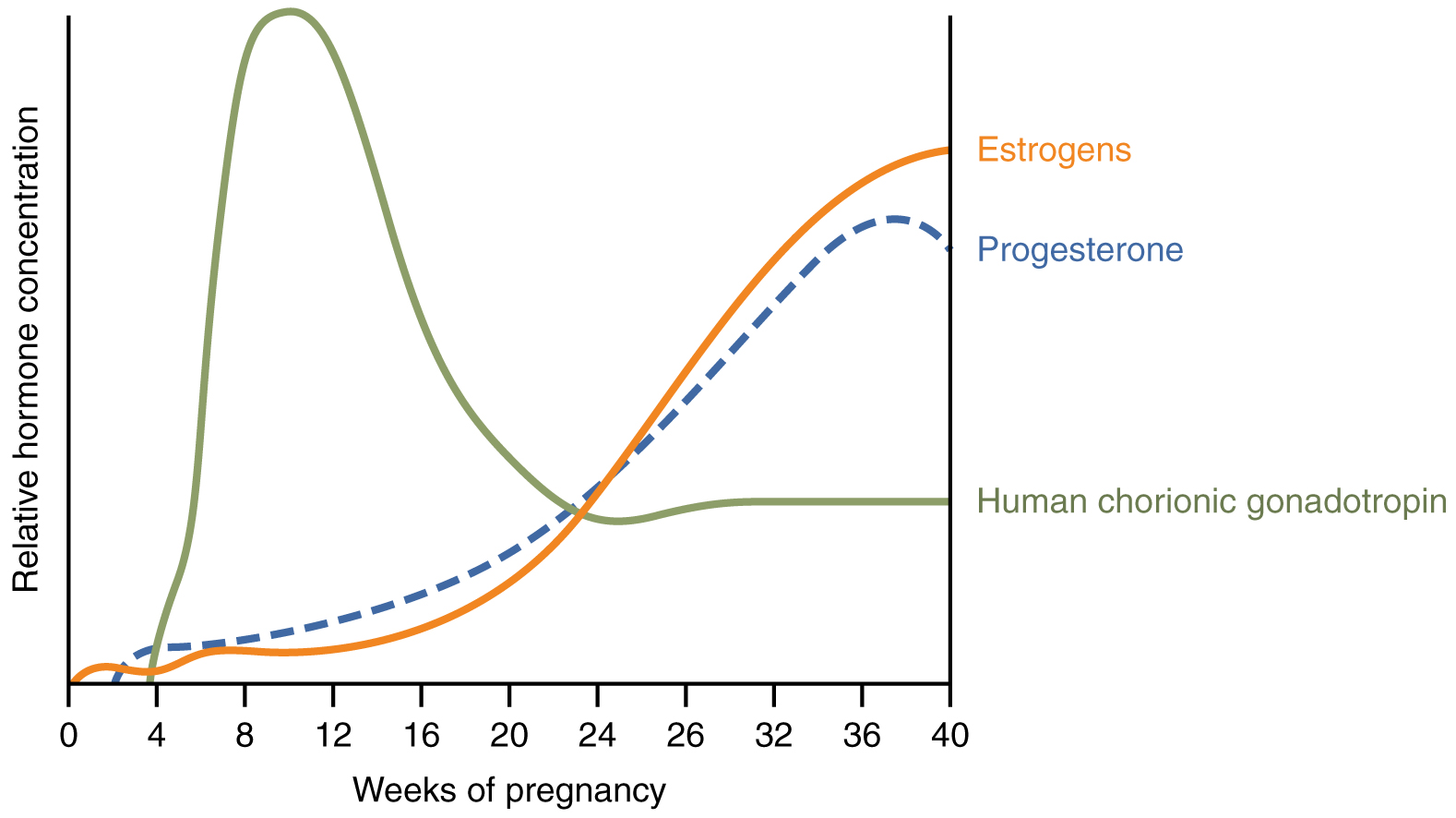 A graph hormone concentration versus week of pregnancy shows how three hormones vary throughout pregnancy.
