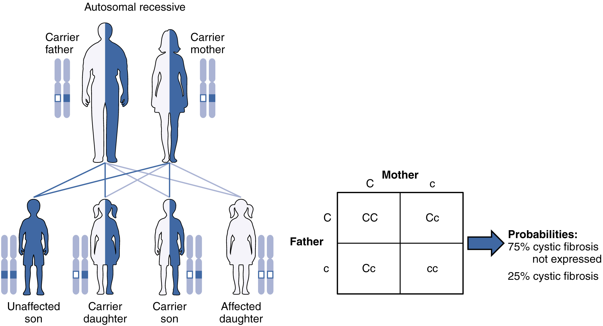 In this figure, the offspring of a carrier father and carrier mother are shown. The first generation has one unaffected son, one affected daughter and one carrier son and one carrier daughter. The second generation cross shows seventy five percent unaffected and twenty five percent affected with cystic fibrosis.