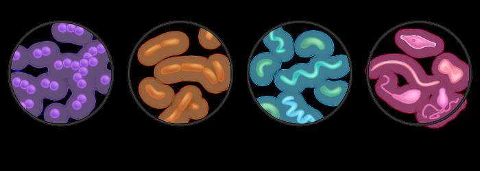 bacteria-morphology