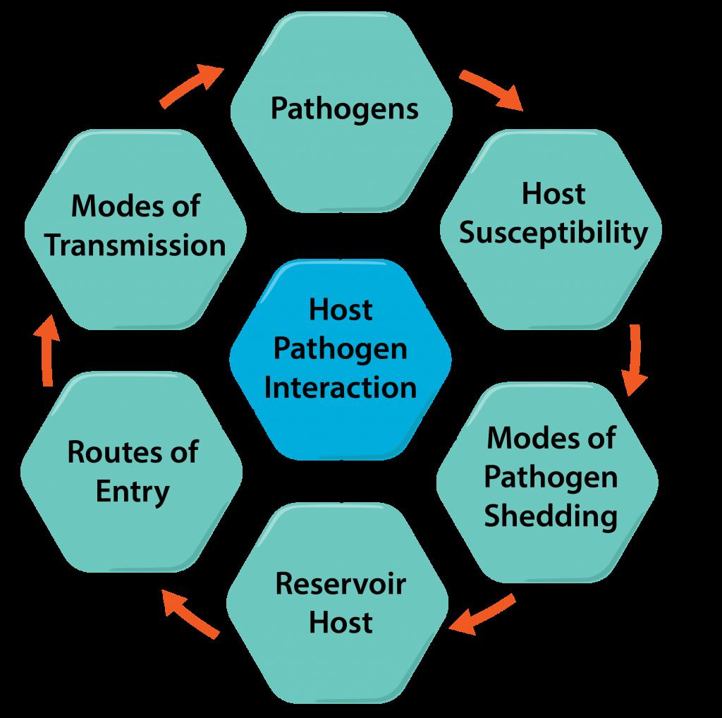 Host-Pathogen Interactions.