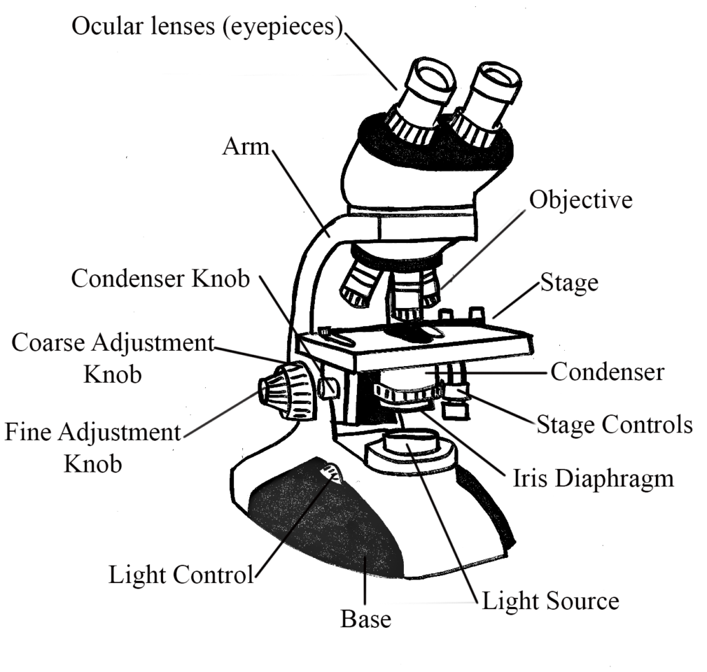 Bright-Field Microscope