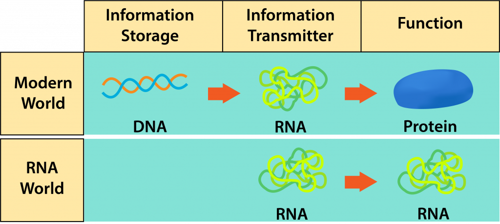 "The ""RNA World"" and the Modern World."