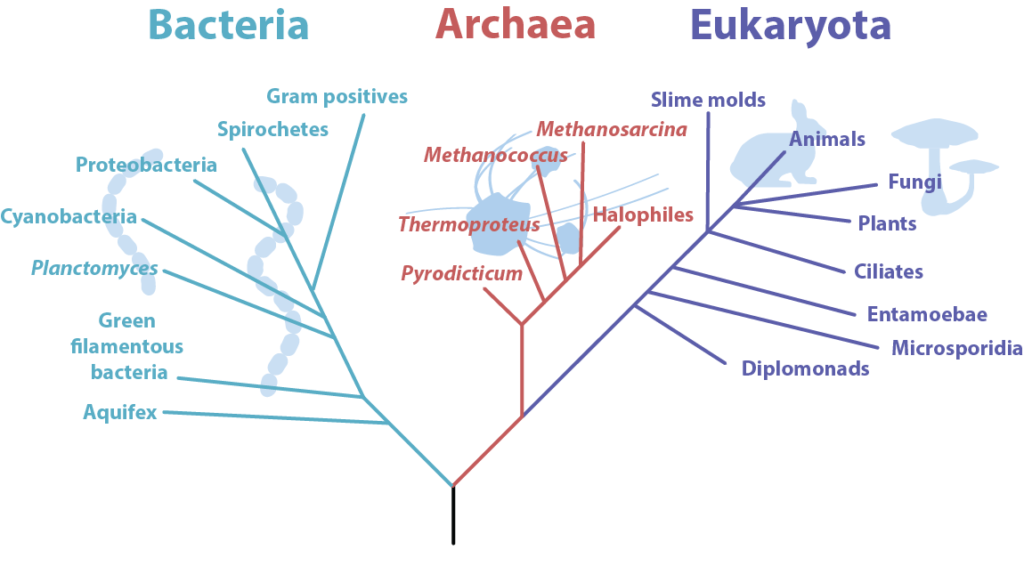 Phylogenetic Tree of Life.