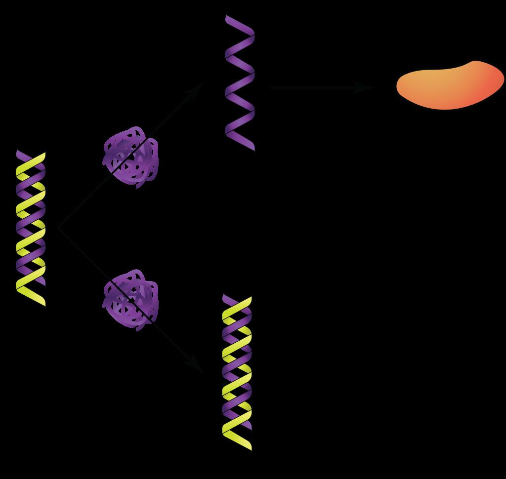dsRNA.
