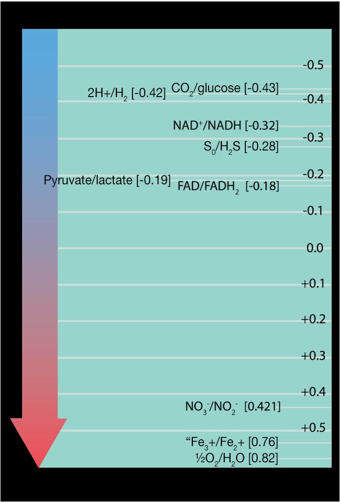 Energetics  U0026 Redox Reactions  U2013 General Microbiology