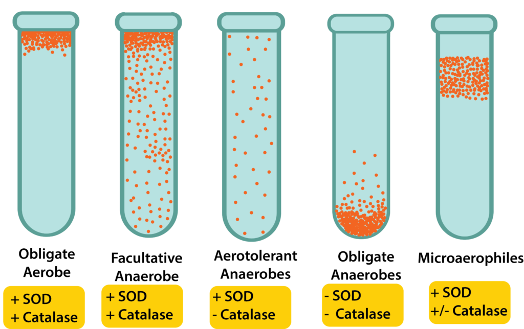 Oxygen and Bacterial Growth.