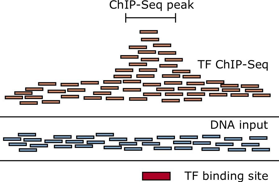 ChIP-seq peaks