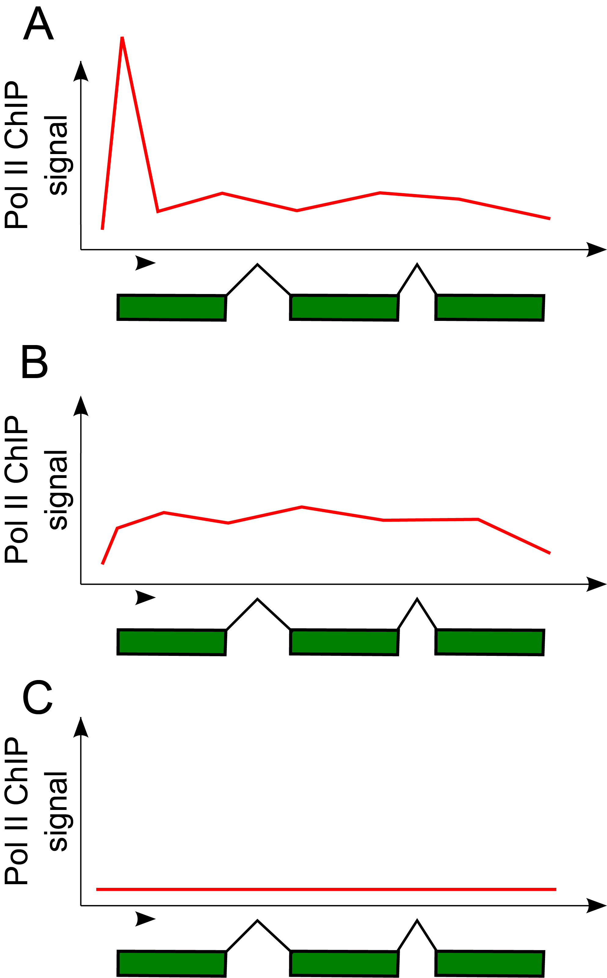 Different Pol II ChIP signals over different genes.