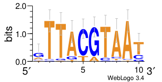 A graph depicting the LOGO image for the giant motif.