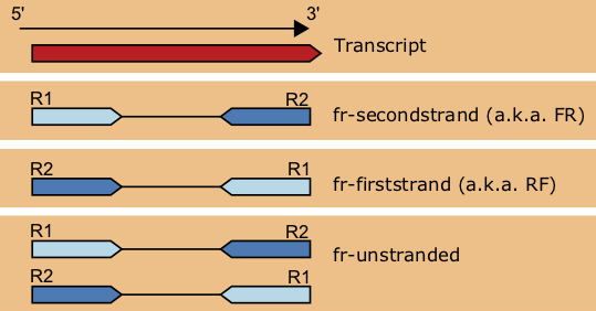 Different library types found in RNA-seq data.