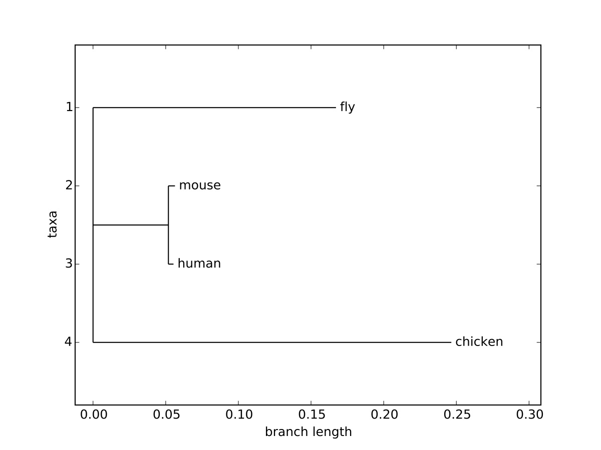 A phylogenetic tree computer with ClustalW for 18s rRNA sequences for fly, mouse, human, and chicken.