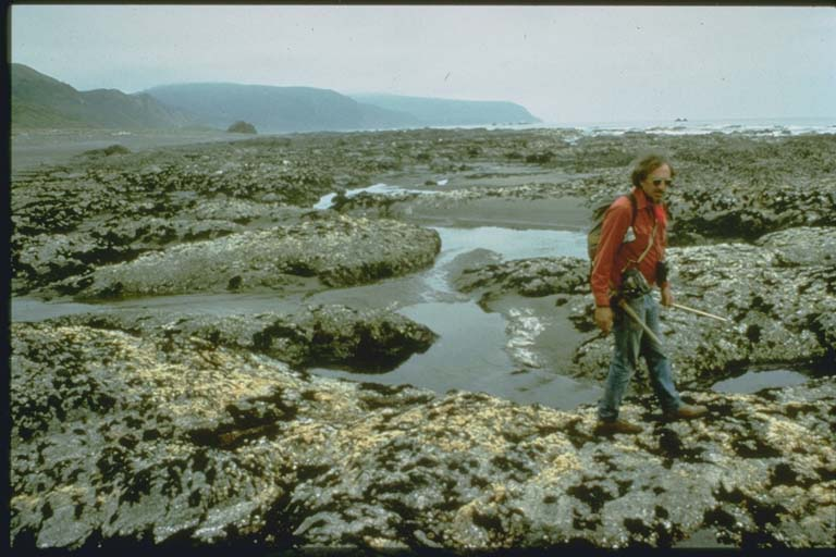 Rocky platform on beach uplifted by the 1992 Cape Mendocino Earthquake on the Cascadia Subduction Zone