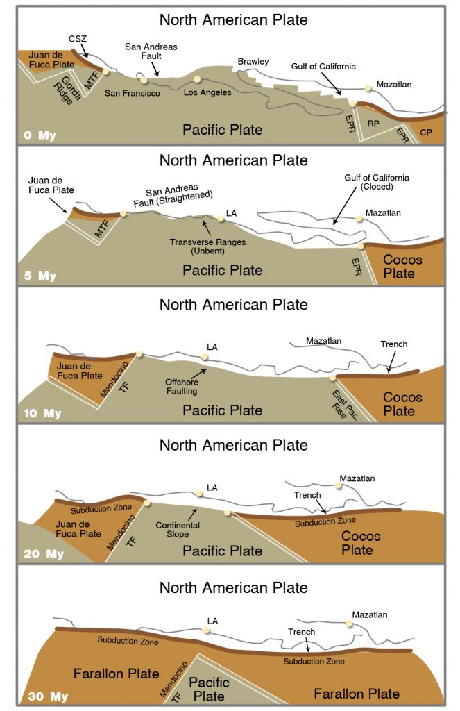 The San Andreas Fault is a transform fault because it separates spreading centers at the Gorda and Juan de Fuca ridges from the spreading centers in the Gulf of California and Imperial Valley