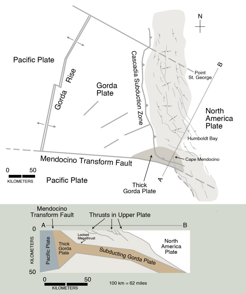 The Cascadia Subduction Zone approaches the coastline in northern California, where active folds and thrust faults have been studied by Gary Carver and his associates at Humboldt State University