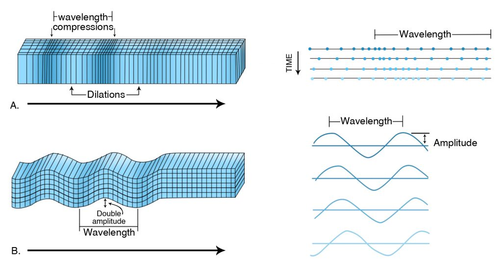 Two views of (a) P waves and (b) S waves, all moving from left to right