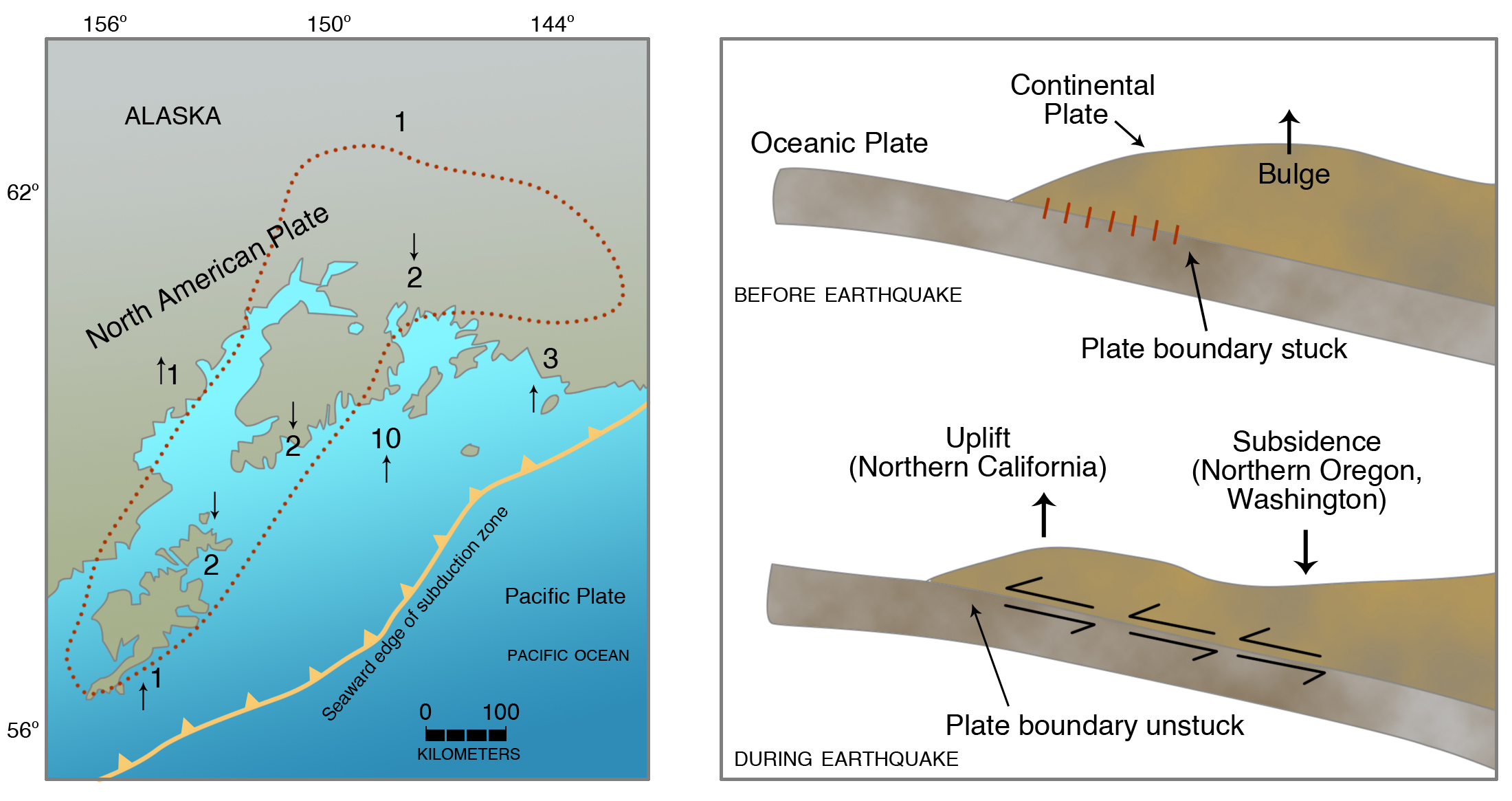 (Right) Cross section showing buildup of elastic strain in North American continental edge before an earthquake, then sudden release (elastic rebound) during earthquake, causing the outermost part of upper plate to go up and an inner part to go down