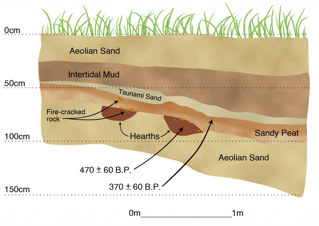 Cross section of buried Native American campsite (hearths, fire-cracked rock) overlain by a soil zone submerged by the A.D. 1700 Cascadia Subduction Zone earthquake and covered by a tsunami deposit.