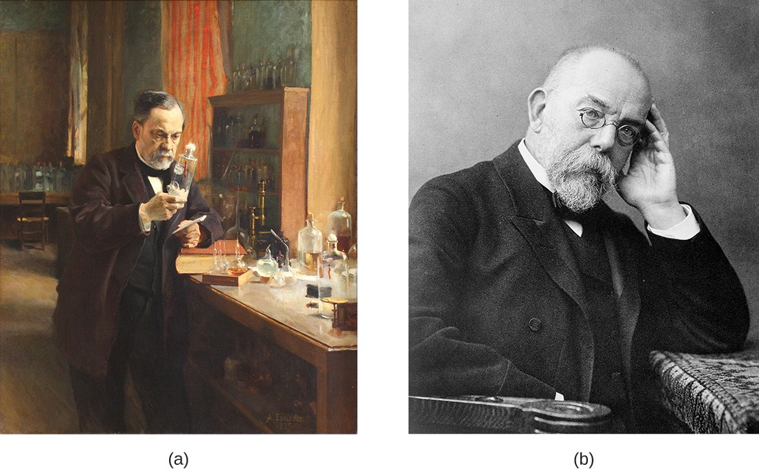 (a) Louis Pasteur (1822–1895) is credited with numerous innovations that advanced the fields of microbiology and immunology. (b) Robert Koch (1843–1910) identified the specific microbes that cause anthrax, cholera, and tuberculosis.