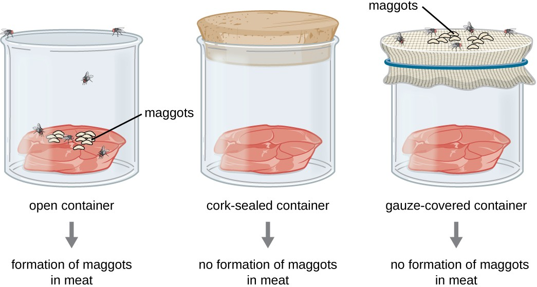 Francesco Redi's experimental setup consisted of an open container, a container sealed with a cork top, and a container covered in mesh that let in air but not flies. Maggots only appeared on the meat in the open container. However, maggots were also found on the gauze of the gauze-covered container.