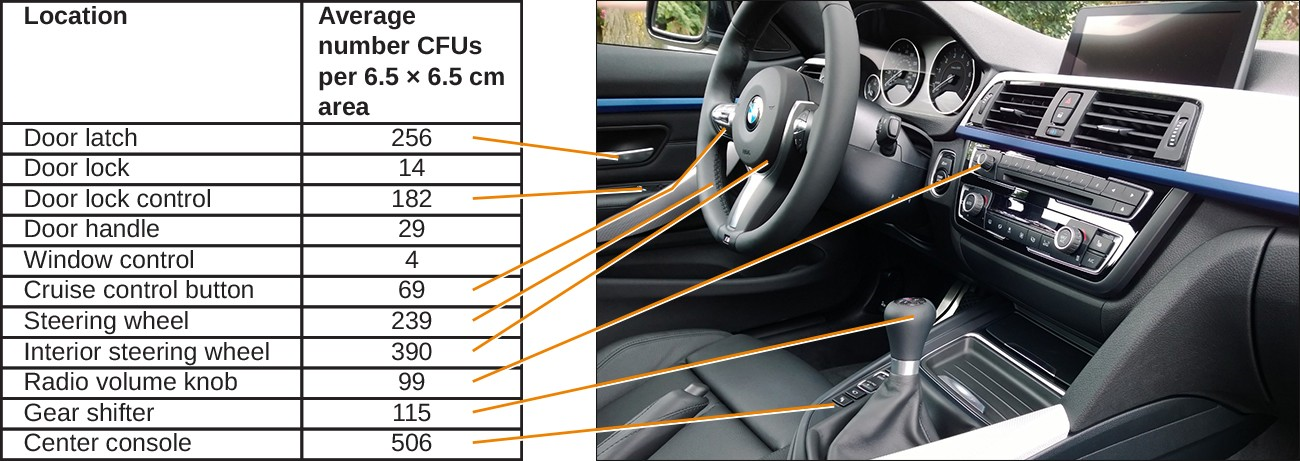 "Most environments, including cars, are not sterile. A study<a class=""footnote"" title=""R.E. Stephenson et al. ""Elucidation of Bacteria Found in Car Interiors and Strategies to Reduce the Presence of Potential Pathogens.""Biofouling 30 no. 3 (2014):337–346."" id=""return-footnote-187-1"" href=""#footnote-187-1"" aria-label=""Footnote 1""><sup class=""footnote"">[1]</sup></a> analyzed 11 locations within 18 different cars to determine the number of microbial colony-forming units (CFUs) present. The center console harbored by far the most microbes (506 CFUs), possibly because that is where drinks are placed (and often spilled). Frequently touched sites also had high concentrations."