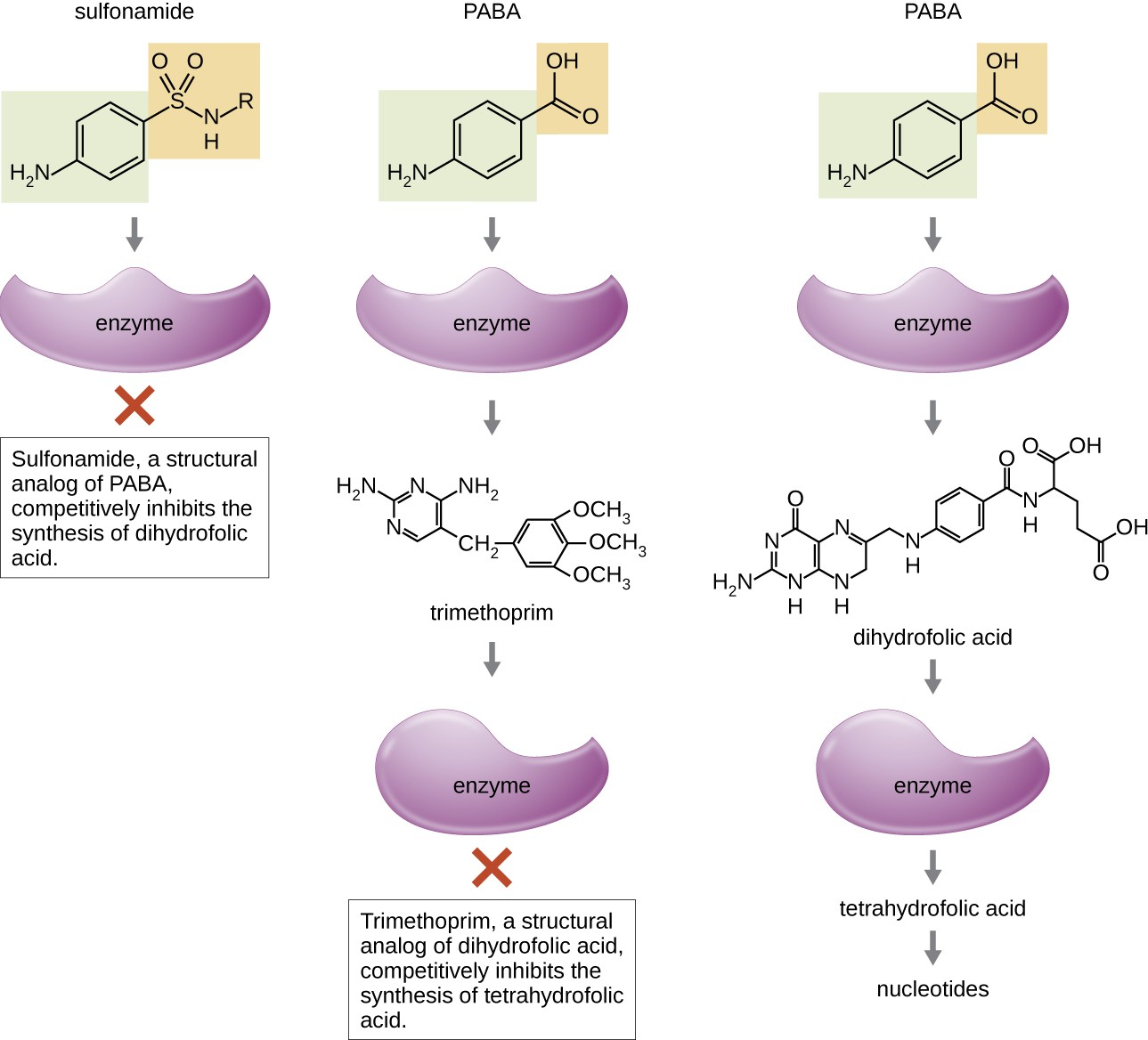Sulfonamides and trimethoprim are examples of antimetabolites that interfere in the bacterial synthesis of folic acid by blocking purine and pyrimidine biosynthesis, thus inhibiting bacterial growth.